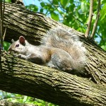 squirrel_tree