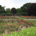 Fields at Park of Roses