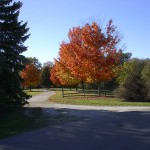 10 Inexpensive Fall Activities in Central Ohio