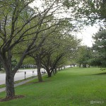 tree_lined_columbus