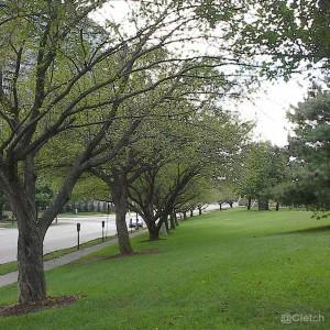 tree_lined_columbus