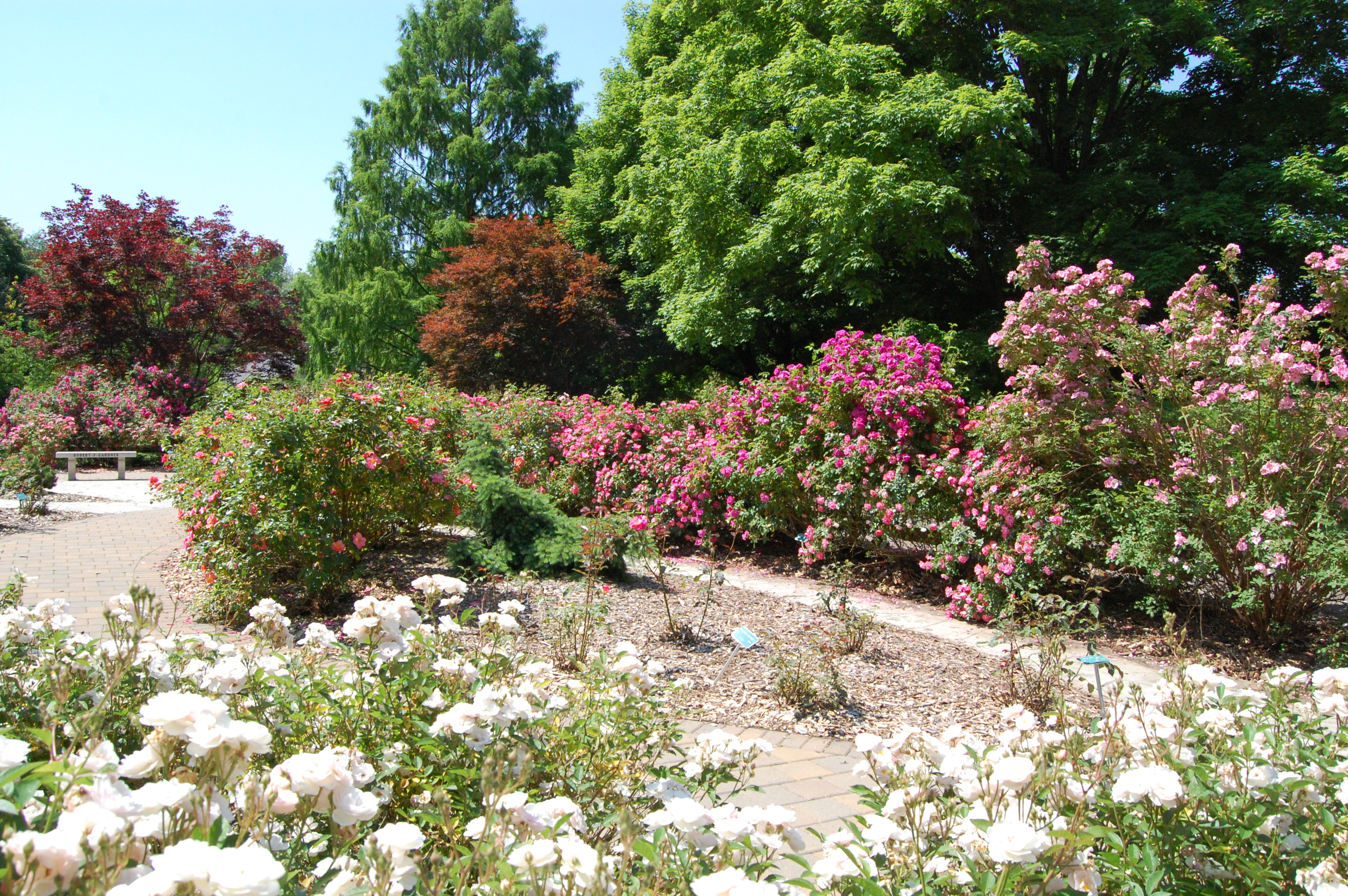 Stop And Smell The Roses At Whetstone Park Of Roses The