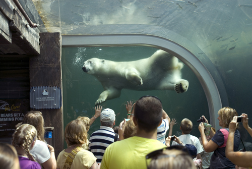 Talk To The Animals At The Columbus Zoo In Powell The