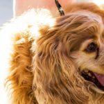WAG! Dog Festival in Hilliard