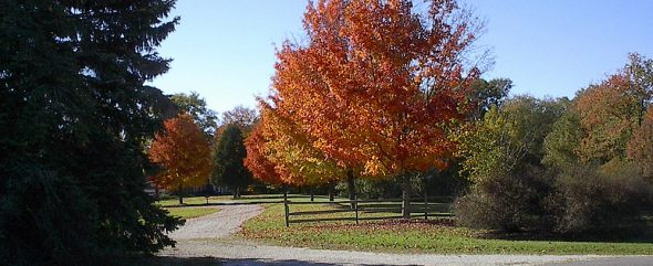 10 inexpensive fall activities for the whole family - Fall Olentangy