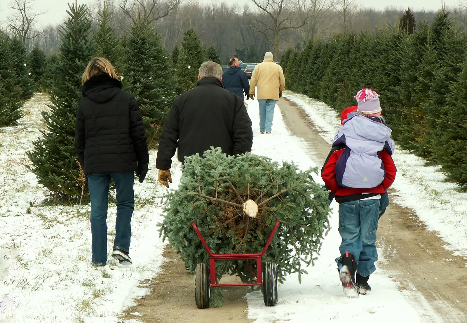 Central Ohio Christmas Tree Farms