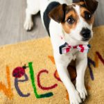 How Pets Impact Our Real Estate Decisions