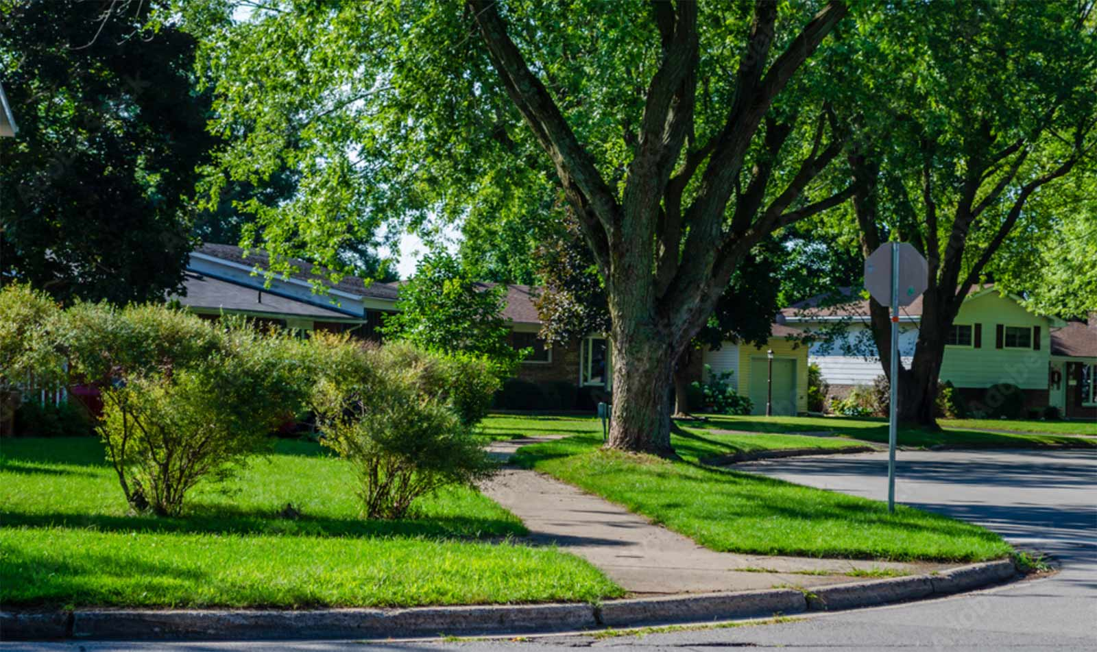 Get a Permit Before Planting a Street Tree in Columbus